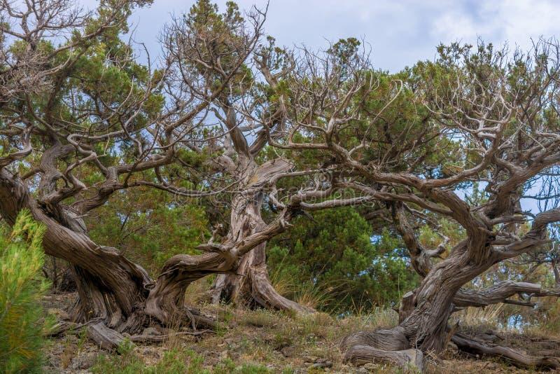 Relikwii drzewo zdjęcia stock