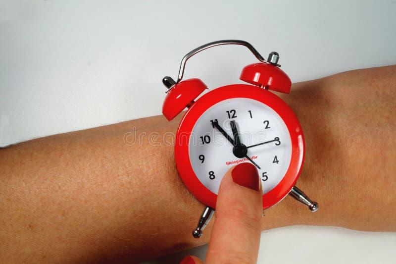 Reloj biológico fotos de archivo libres de regalías