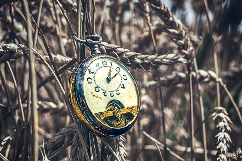 Reloj de bolsillo antiguo roto en campo de trigo imagen de archivo libre de regalías