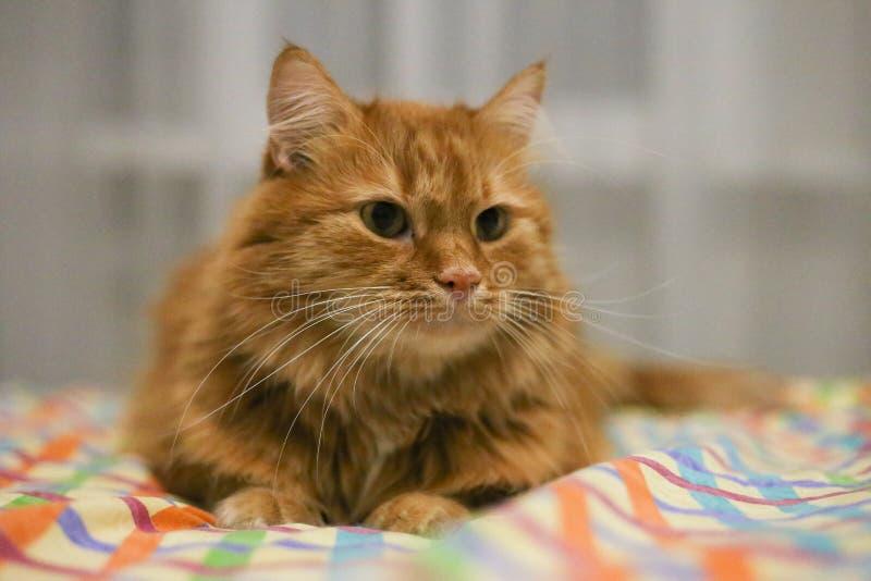Reloj dirigido rojo del gato en alguna parte fotos de archivo