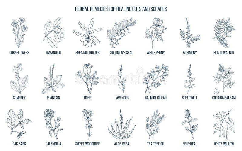 Remèdes de fines herbes pour des coupes et des coups de racloir de guérison illustration libre de droits
