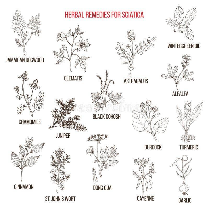 Remédios ervais para a ciática ilustração stock