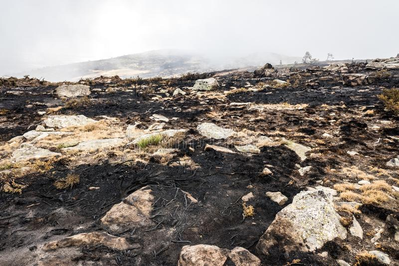 Remains of a forest fire with burned scrub royalty free stock images