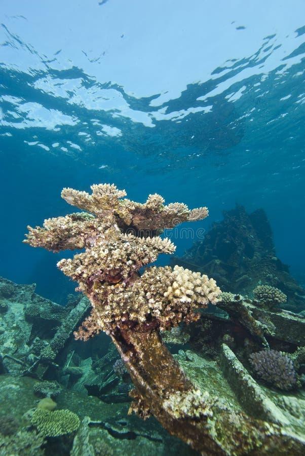 remains sänder undervattens- skeppsbrutet royaltyfria foton