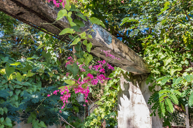 Remains of a structure with vegetation and flowers. In Christiansted St. Croix stock photography