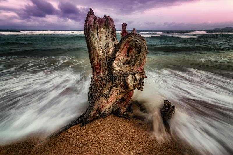 Battered Tree Stump in the Surf stock images