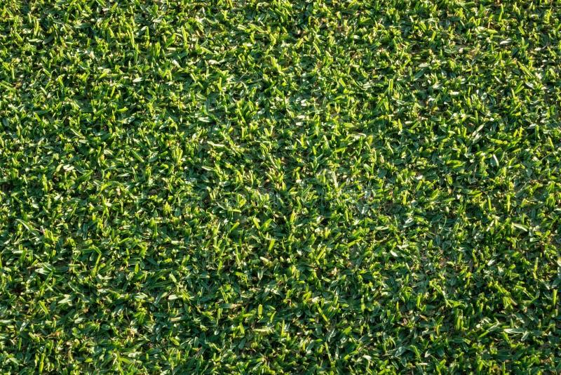 Remate abajo de vista del césped nuevamente segado de la hierba foto de archivo libre de regalías