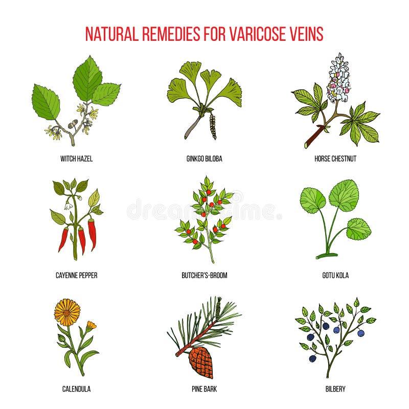 Remedios herbarios de la variz ilustración del vector