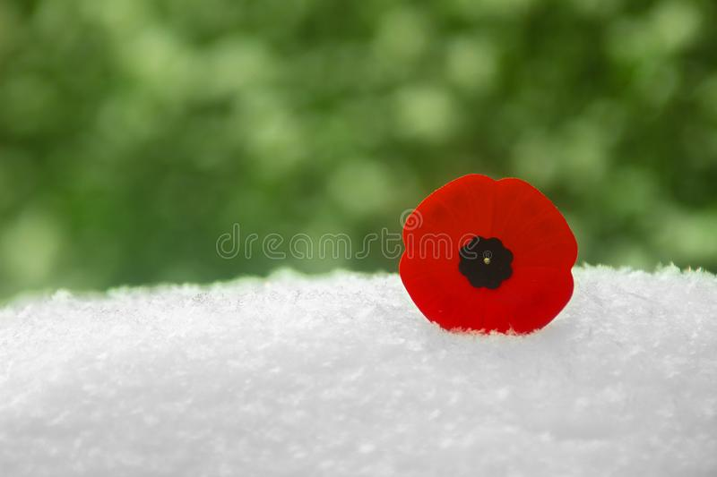 Remembrance Day Poppy Flower on snow and green bushes on the background royalty free stock photography
