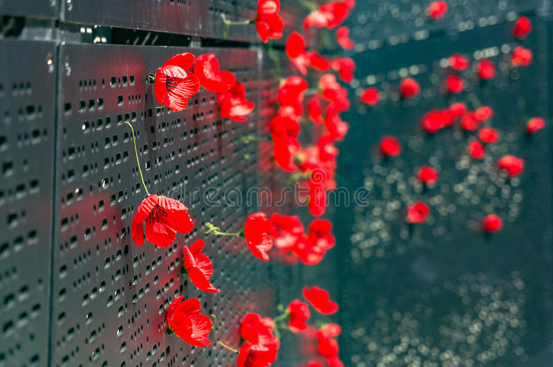 Remembrance day poppy flowers stock photo image of memorial download remembrance day poppy flowers stock photo image of memorial shrine 99194074 mightylinksfo