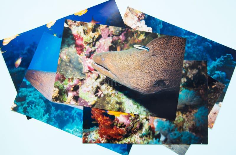 Remembtance d'album photos et voyage de nostalgie dans la plongée d'été Pousse par me photos libres de droits