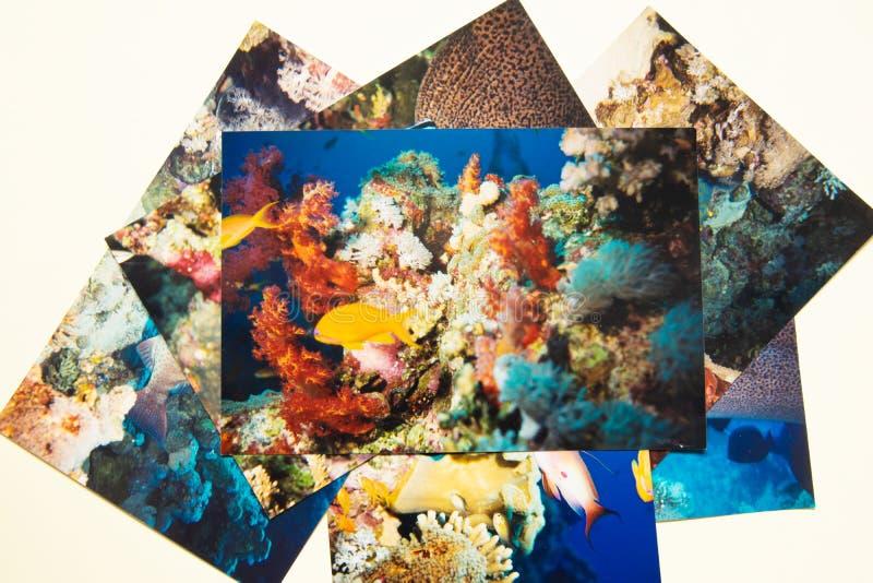 Remembtance d'album photos et voyage de nostalgie dans la plongée d'été Pousse par me photographie stock libre de droits