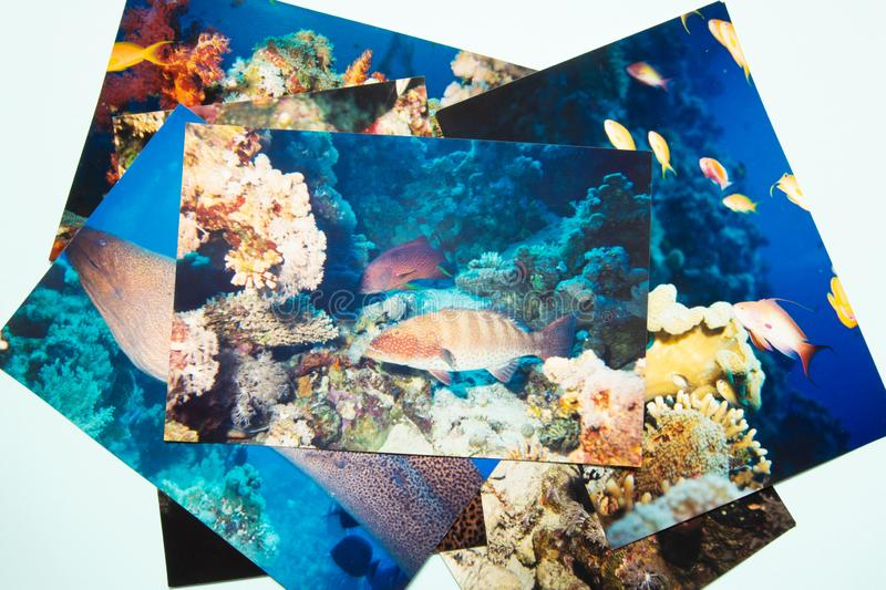 Remembtance do álbum de fotografias e viagem da nostalgia no mergulho do verão Tiro por mim mesmo foto de stock