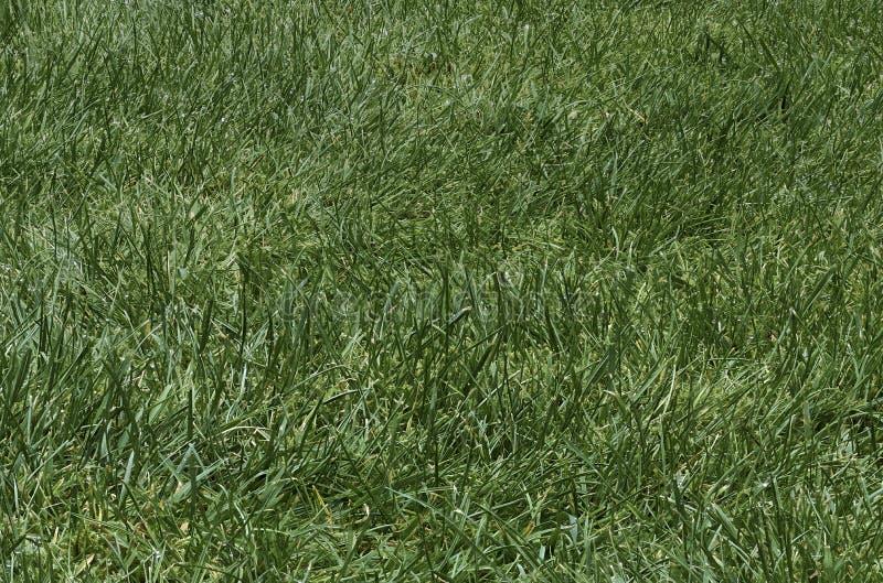 Remendo da grama verde áspera fotografia de stock royalty free