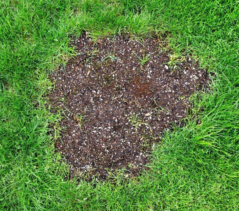 Remendo do reparo no gramado natural da grama foto de stock royalty free