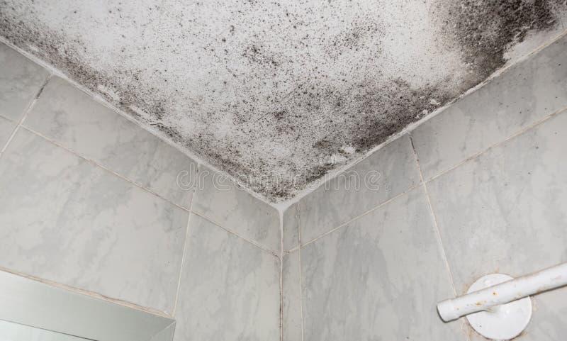 Remendos úmidos no telhado do banho, vista inferior fotografia de stock royalty free