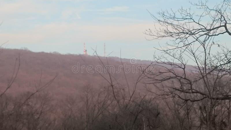 Remete-rét en invierno fotografía de archivo