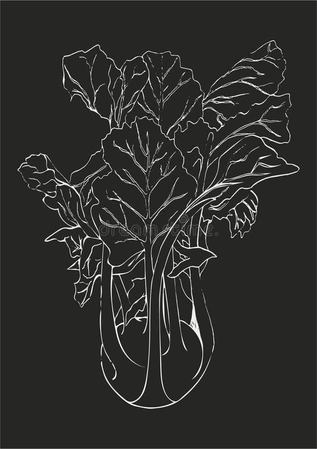Remettez à aspiration la ligne blanche chou de chou-rave d'isolement sur le dos gris-foncé illustration stock