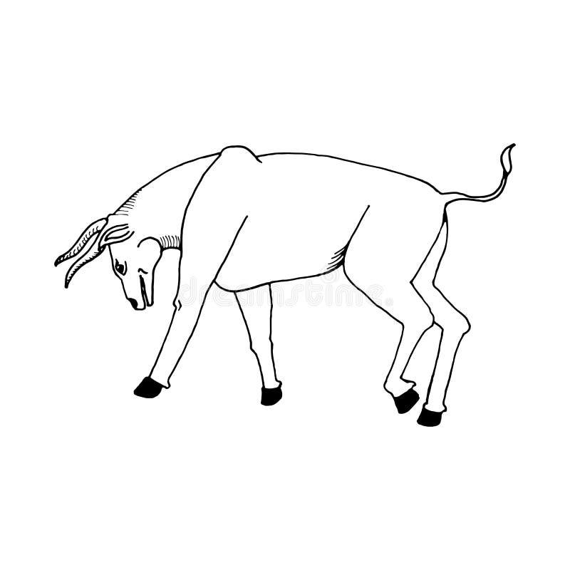 Remettez à aspiration un croquis de style de taureau sur un blanc noir illustration de vecteur