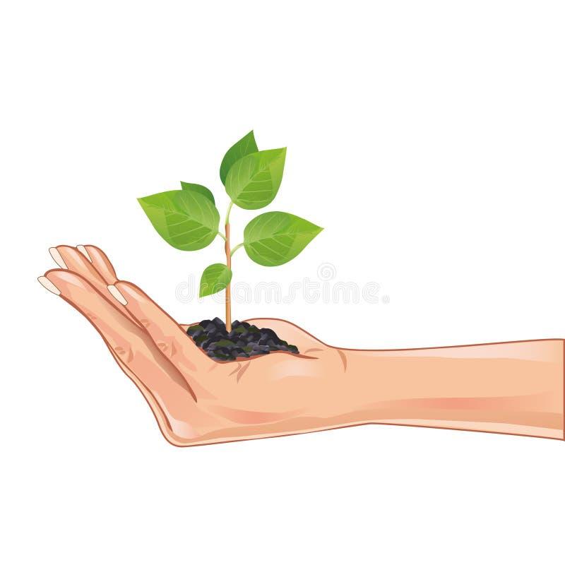 Remettez retenir une plante verte, d'isolement sur le blanc illustration stock