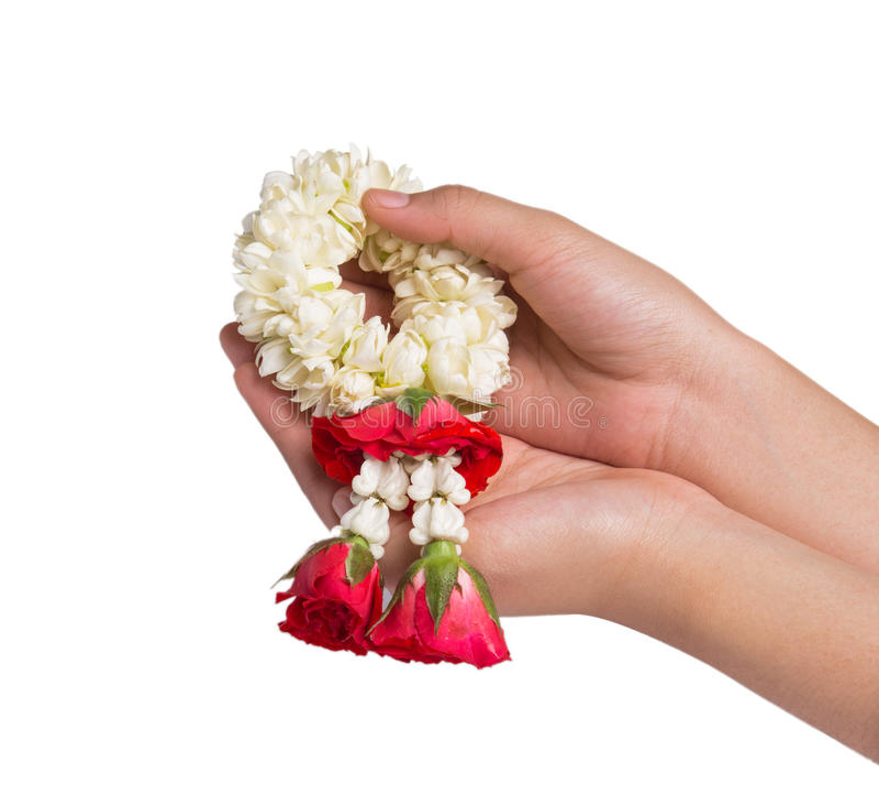 Remettez tenir une guirlande de jasmin sur le fond blanc photographie stock