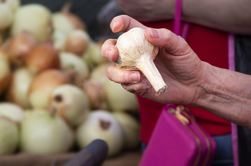 Remettez tenir une tige de garic organique avec le client et les oignons brouillés à l'arrière-plan photographie stock libre de droits