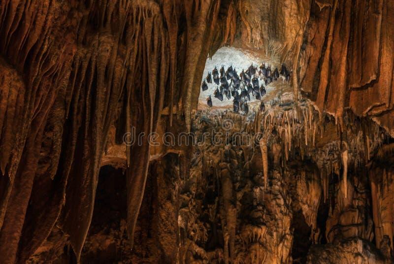Remise de battes à l'envers dans de belles formations de caverne avec le stala image stock