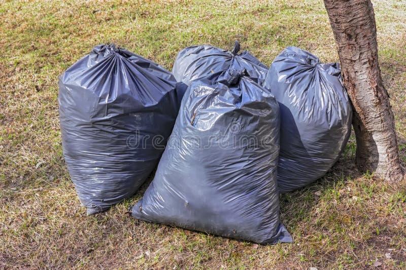 Remo??o da folha Sacos de pl?stico pretos com as folhas secas do ano passado no gramado no parque fotos de stock