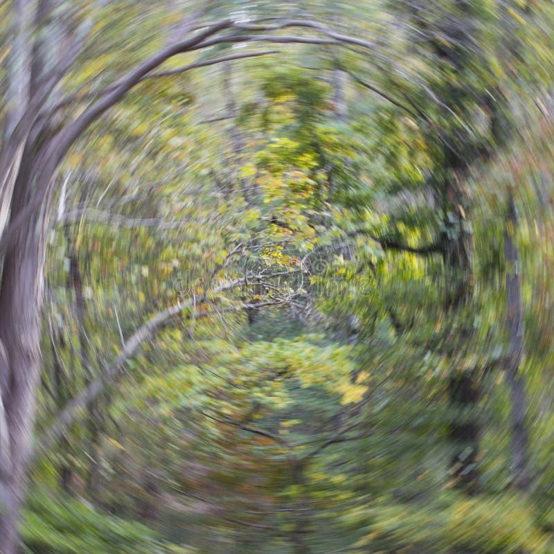 Remoinho da floresta imagens de stock