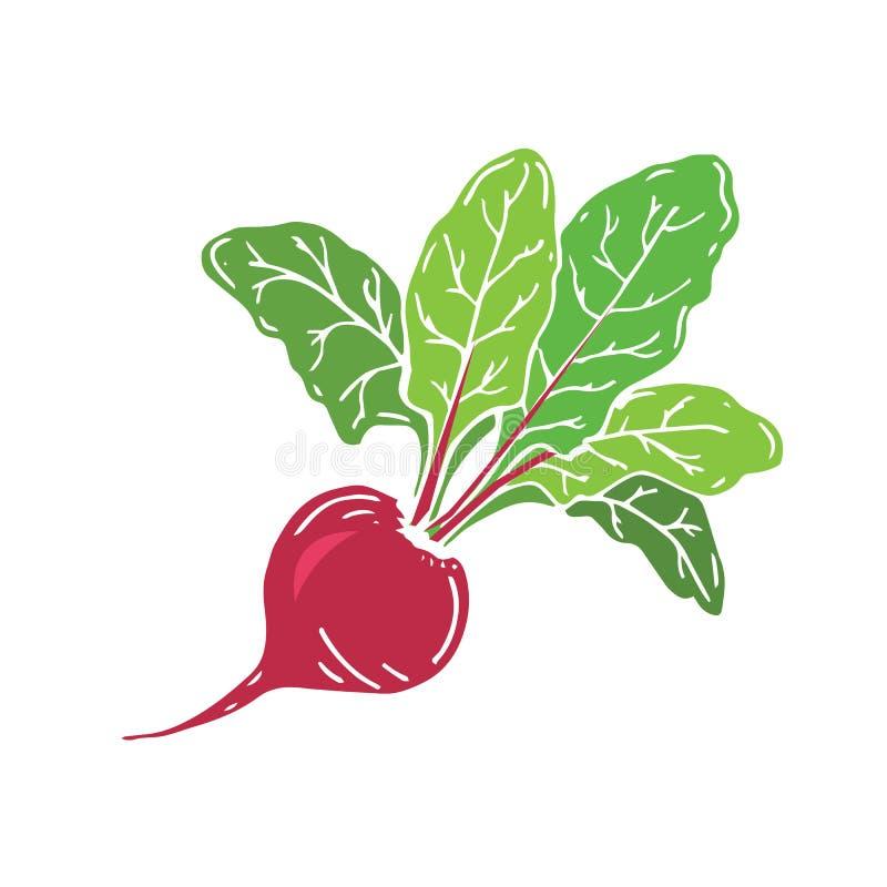 Remolacha fresca con la hoja Ilustración del vector Remolachas jugosas Verdura stock de ilustración