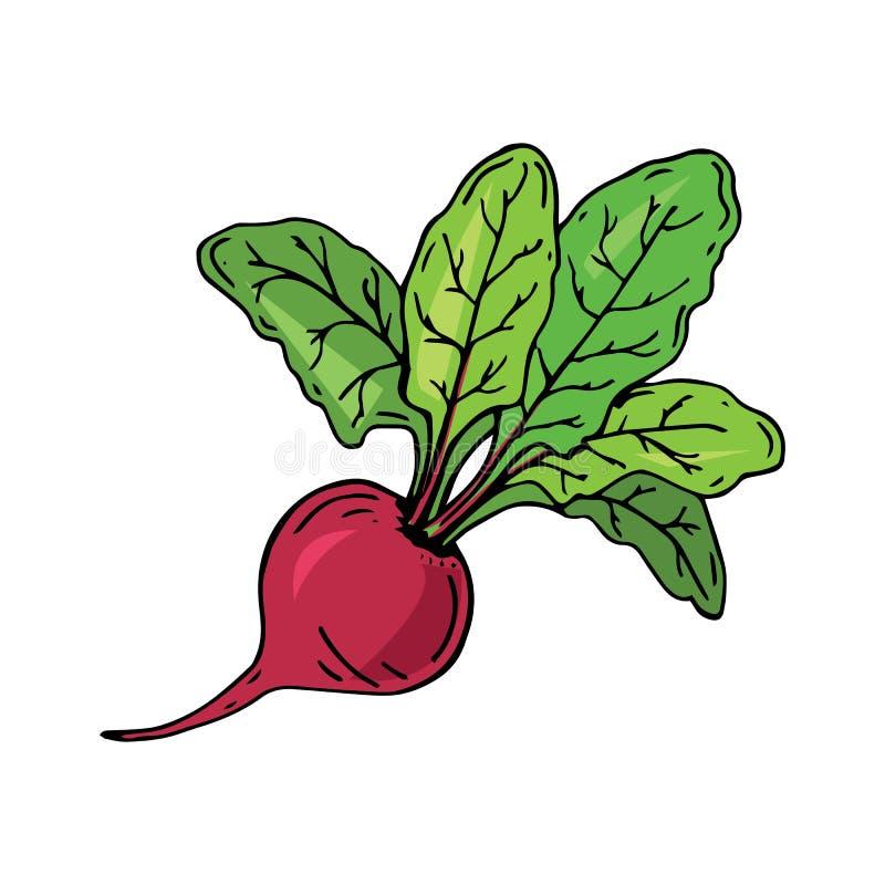 Remolacha fresca con la hoja Ilustración del vector Remolachas jugosas Verdura ilustración del vector