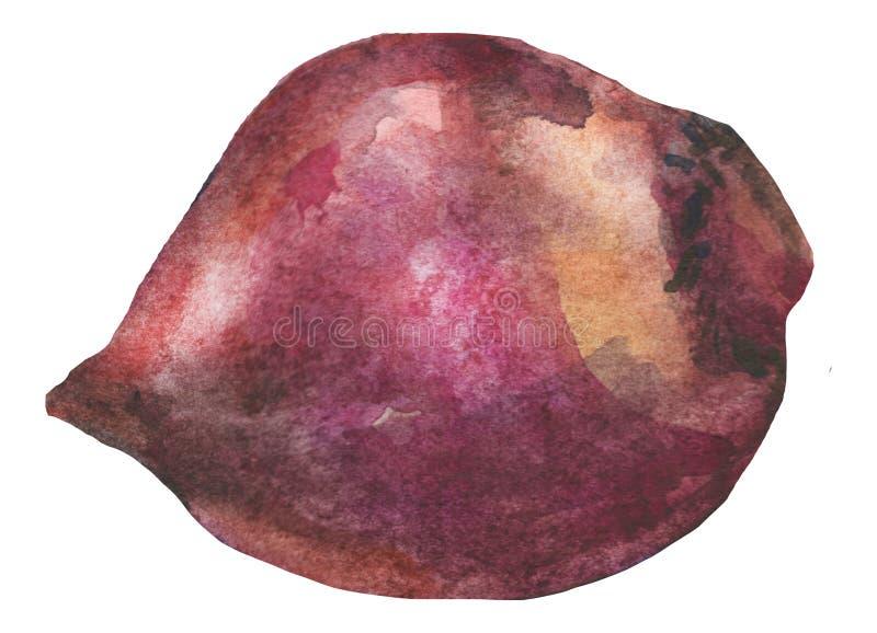 Remolacha, pintada en watercoolor ejemplo exhausto de la acuarela de la mano de la verdura Alimento stock de ilustración