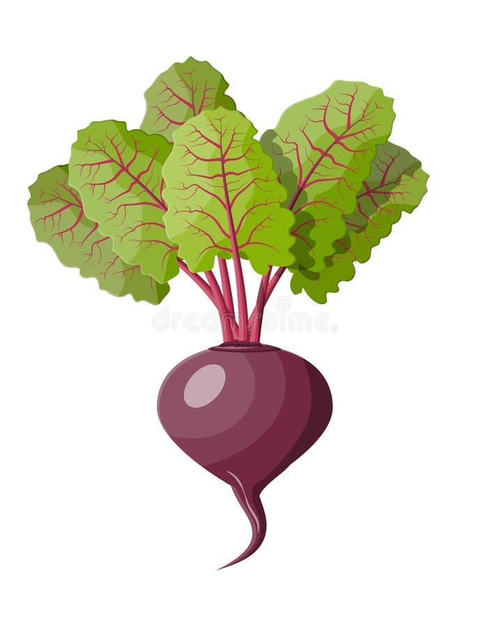Remolachas con las hojas superiores Verdura de la remolacha stock de ilustración
