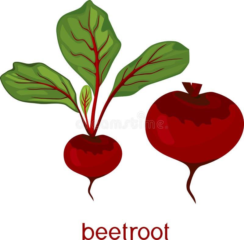 Remolachas crudas rojas con las hojas del verde y título en el fondo blanco stock de ilustración
