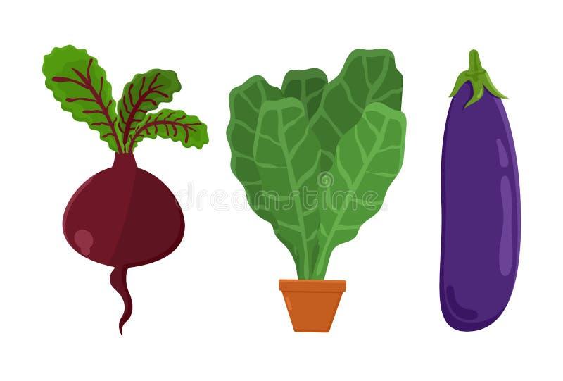 Remolachas determinadas de la comida vegetariana, ejemplo del vector stock de ilustración