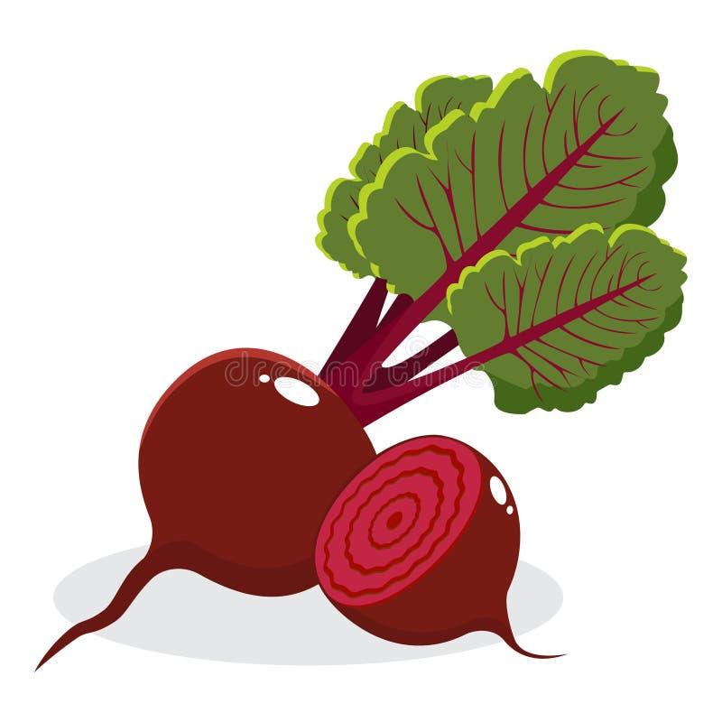 Remolachas rojas con las hojas enteras y corte en el fondo blanco Ilustración drenada mano del vector ilustración del vector