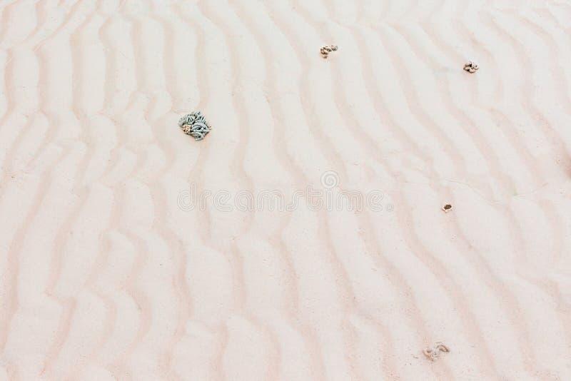 Remonta las ondas de la playa tienen taburete de los gusanos de mar fotos de archivo