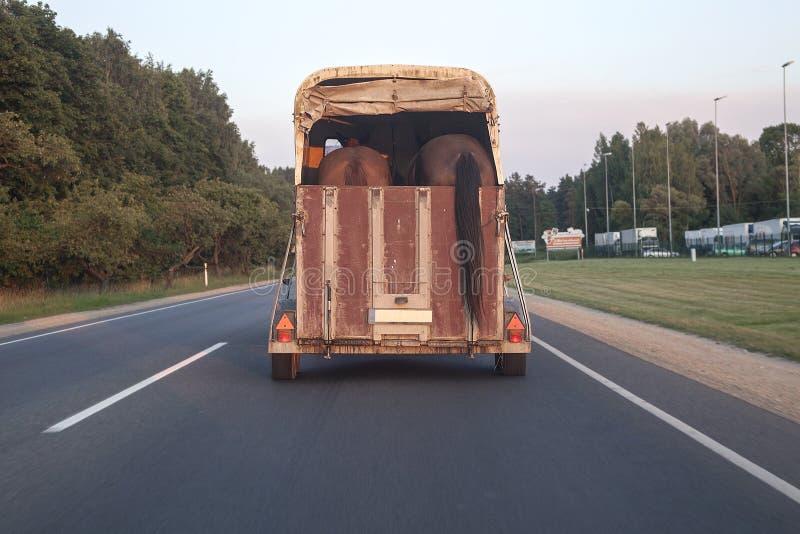 Remorque de cheval dans l'action sur une autoroute photo libre de droits