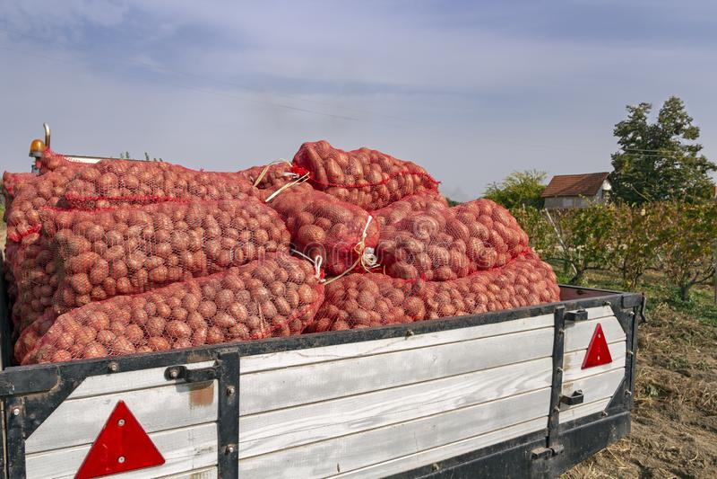 Remorque de tracteur chargée avec des sacs de pommes de terre moissonnées photographie stock libre de droits