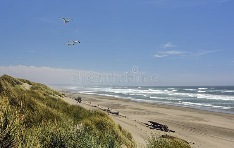 Remote Beach on a Summer Day stock photos
