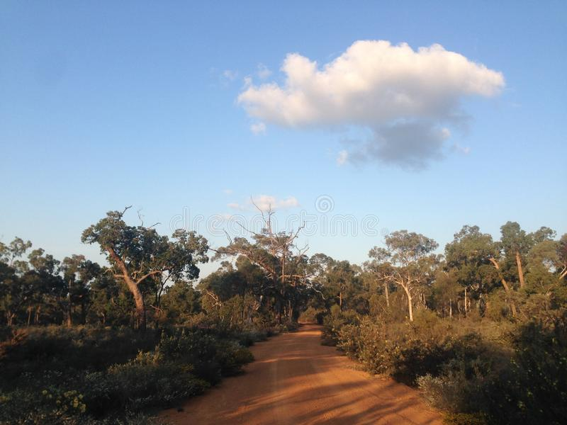 Remote desert road with trees, blue sky and a single cloud. A dirt road curves between trees in the Australian bush. A single fluffy cloud sits in the blue sky royalty free stock photography