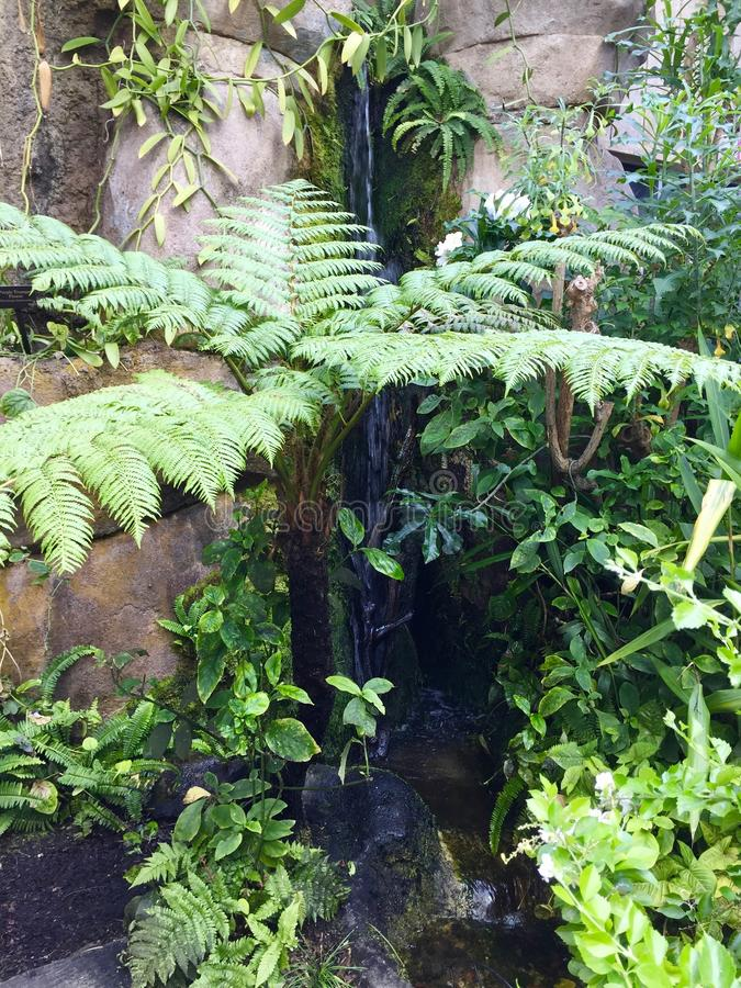 A remote hidden waterfall. A trickling waterfall in the forest royalty free stock photos