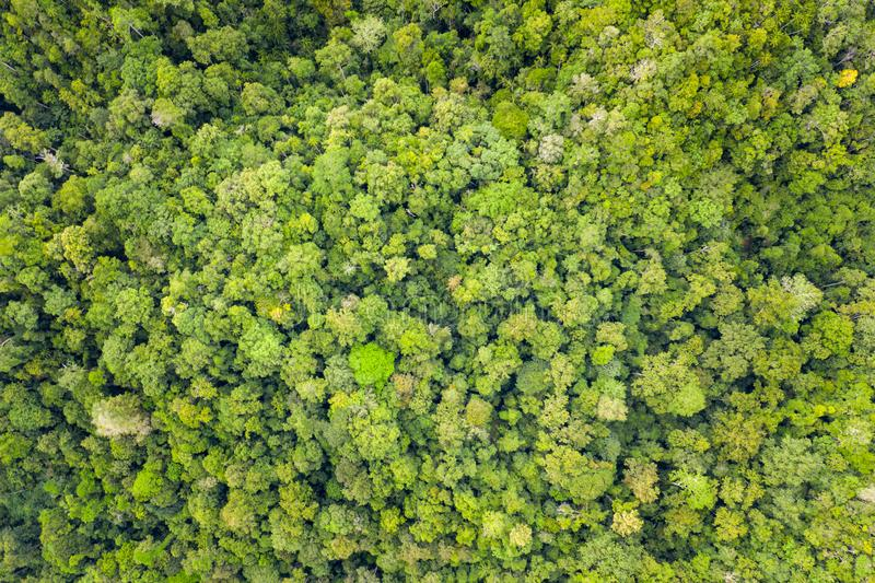 Aerial View of Thick Rainforest in Raja Ampat stock photography