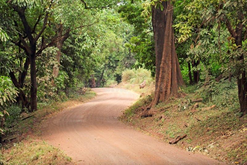 Remote road in Lake Manyara National park Tanzania royalty free stock photo