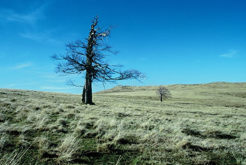 Remote tree on mountain field stock photos