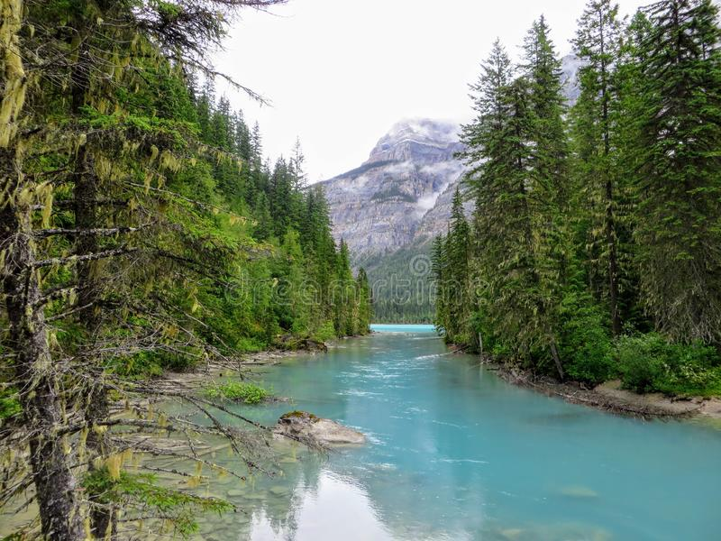 A remote turquoise river feeding into Kinney Lake, deep in the wilderness of the Rockies. This photo was taken along the Berg Lake Trail in Mount Robson royalty free stock photos