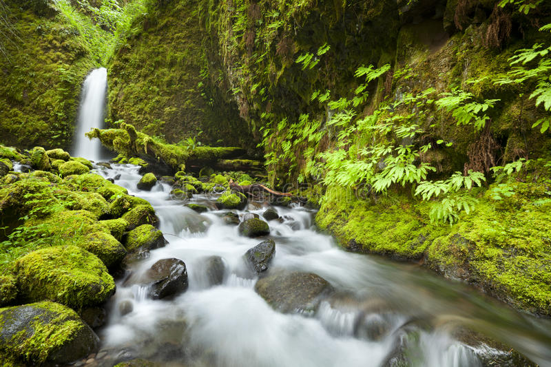 Remote waterfall in rainforest, Columbia River Gorge, USA. A hard-to-reach and remote waterfall in the backcountry of the Columbia River Gorge, Oregon, USA royalty free stock photo