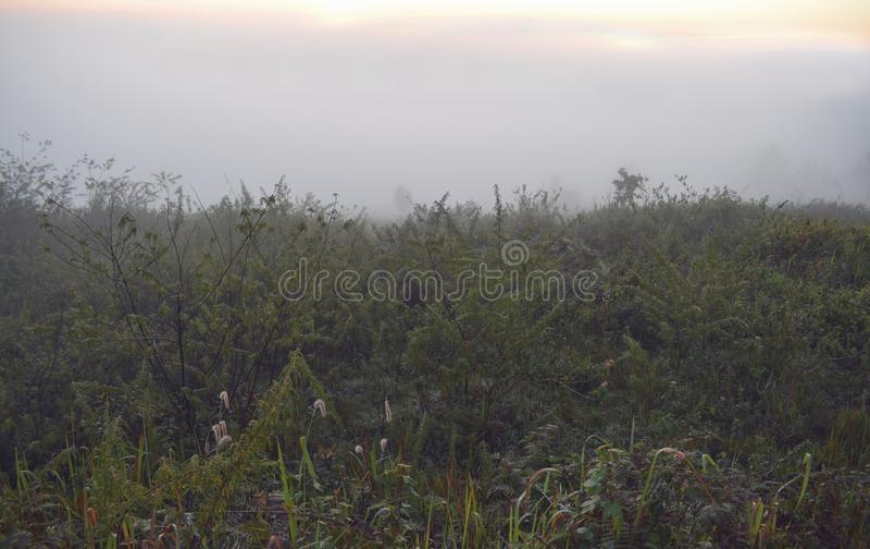 Remova ervas daninhas da grama, do prado com relaxamento na manhã e do ar fresco, parte 7 da liberdade imagem de stock
