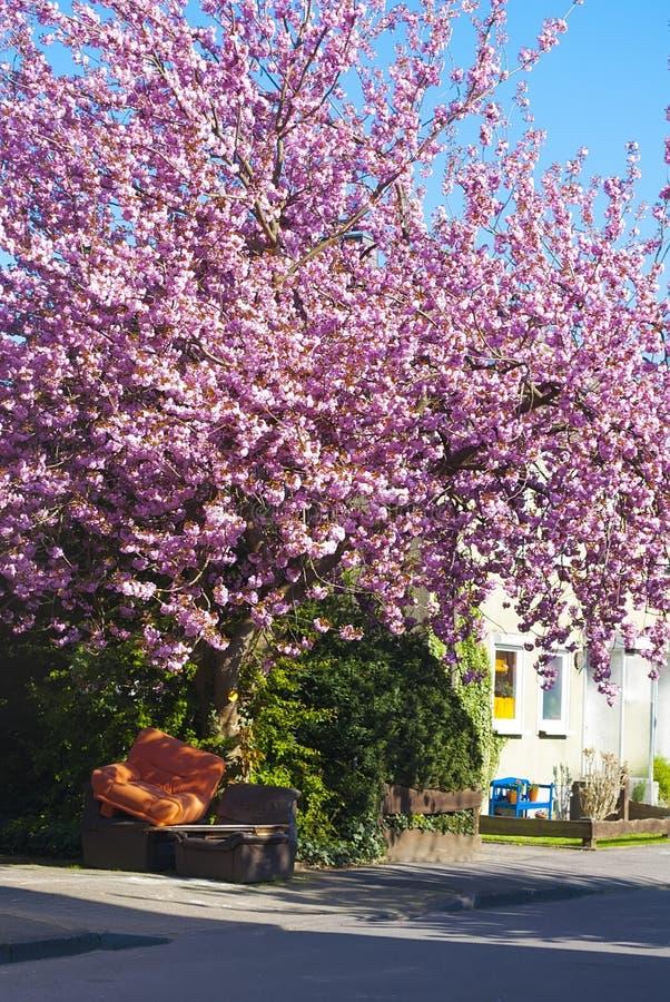 Remplacer les meubles anciens, un fauteuil cassé sous les fleurs de cerisier de floraison, une journée de printemps lumineuse photographie stock