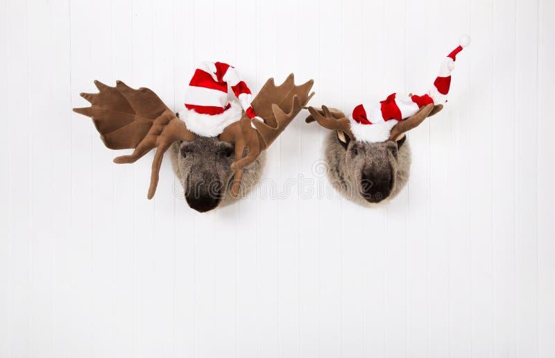 Ren för två plysch med santa hattar som hänger på en trävägg för royaltyfria foton